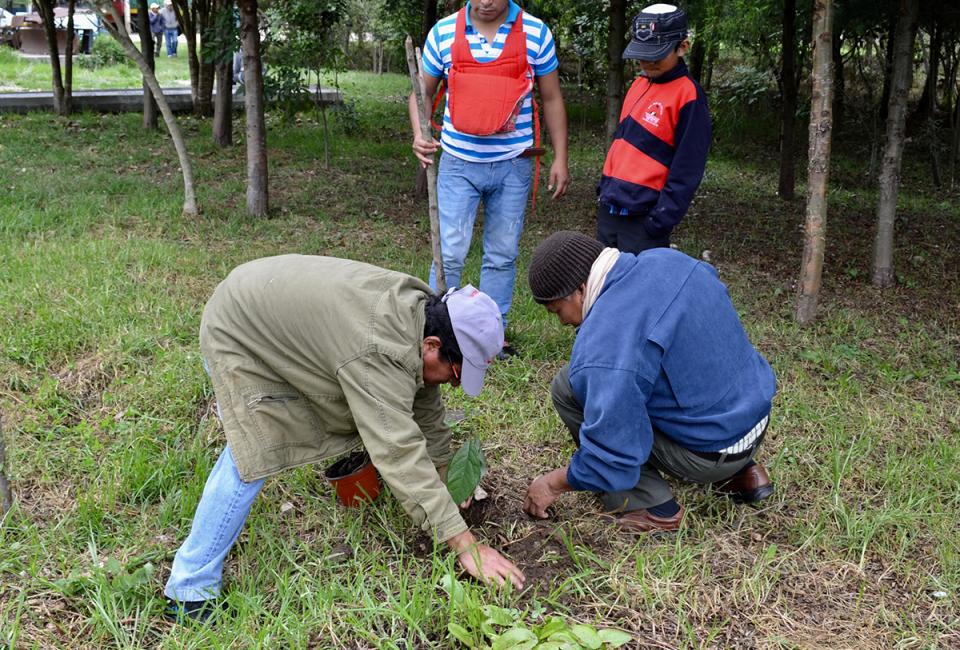 08-Arborización